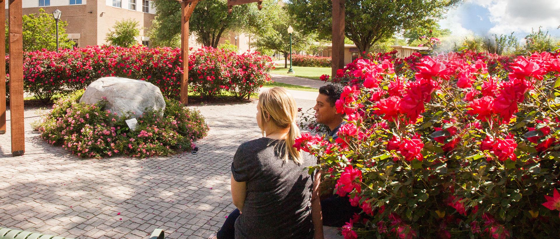 Guynes Rose Garden